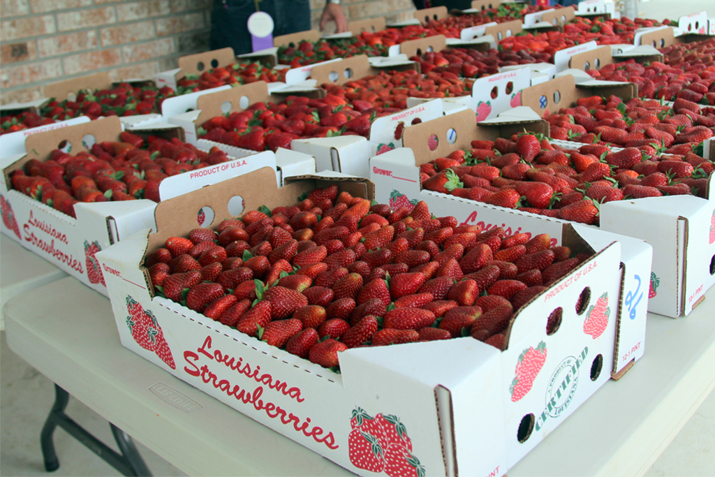 Florida Strawberry Festival 2020.Ponchatoula Strawberry Festival Ponchatoula La 70454 Home